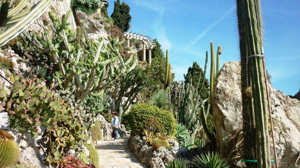 Экзотический сад в Монте Карло   рай кактусов с ароматом пустынь